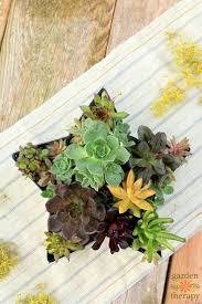 229 best succulents and cacti images on pinterest plants