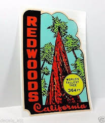 California travel stickers images 167 best california 39 s redwood and sequoia trees images on jpg