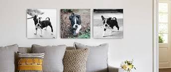 Cushion Pets Custom Pet Photo Gifts Photo Gifts For Pets Snapfish