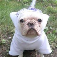 Hoodie Halloween Costumes French Bulldog Boston Terrier Pug Dog Froodies Hoodies Halloween