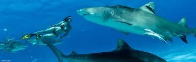 lesley rochat shark warrior shark u0026 marine conservation