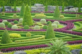 ornamental plants tree tropical landscape in nature garden royalty
