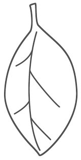 oval coloring page leaf coloring pages pinterest leaves craft and