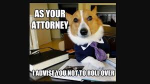 Dog Lawyer Meme - of course there was a comma in i want a lawyer dog lowering the bar