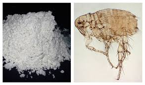 How Long Does Wet Carpet Take To Dry How Long Does Diatomaceous Earth Take To Kill Fleas