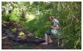 shade native plants real facts about native plants