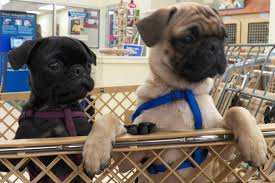 does petco sell dogs pet world