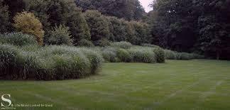 ornamental grasses stecks nursery and landscaping