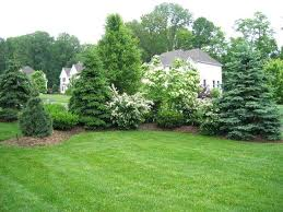 Ideas For Backyard Privacy Landscaping Ideas For Backyard Privacy Landscaping The New House