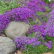 Rock Garden Cground Rock Garden Ground Cover Collection Rock Garden Ground Cover