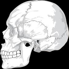 skull cracked free vector graphic on pixabay