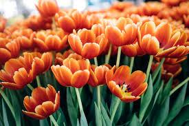 melbourne flower show is an instagrammers dream ticketmaster au blog