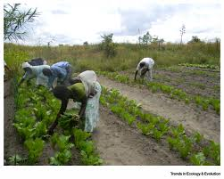 farming approaches for greater biodiversity livelihoods and food