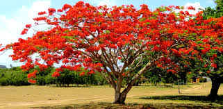 17 of the world s most beautiful trees