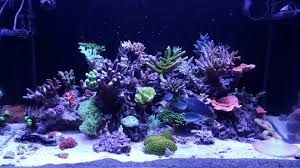 6 bulb t5 combo best color growth reef central online community