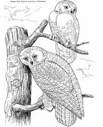 890 owl colouring images coloring books