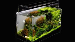 Aquascape Filter Aquascaping Tutorial By James Findley U0027sticks And Stones