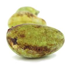 meet pawpaws edible michiana