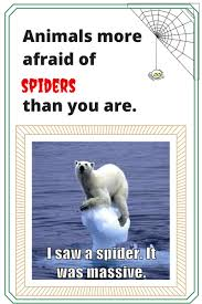 Funny Spider Meme - funny animals more afraid of spiders than you are fridayfrivolity