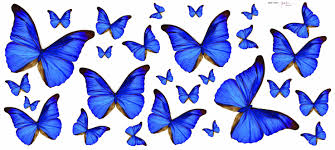 blue butterfly free download clip art free clip art on blue butterfly sticker by creative wall art wallpaper direct