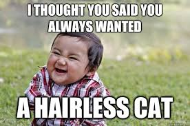 Hairless Cat Meme - i thought you said you always wanted a hairless cat evil toddler