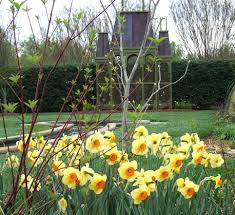 explore the garden daniel stowe botanical garden