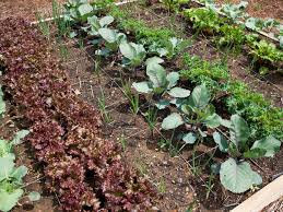 Fall Plants For Vegetable Garden by Edible Landscaping Growing Your Own Food Hgtv