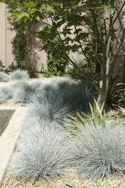 Gartengestaltung Mit Steinen Und Grsern Modern Gräser Garten Verzaubernd Und Entzückend Für Besondere