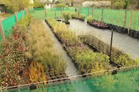 new zealand native plants list our nursery u2014 landscape marlborough