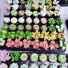 4 assorted 2 5 rooted succulents plants premium quality