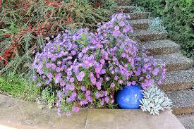 fleurs vivaces rustiques jardin alsace vignoble