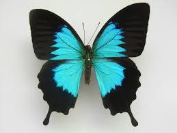 beautiful butterflies child