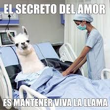 Memes En Espa Ol - memes in español you say happy san valentine s day imgur imgur