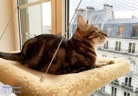 comment fabriquer un arbre a chat le hamac pour chat de fenêtre absolument chats