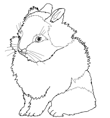 rabbits coloring pages lionhead rabbit coloring page free printable coloring pages