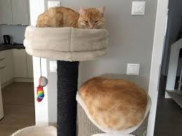 gerüche die katzen nicht mö katzen vertragen sich nicht mehr was kann tun