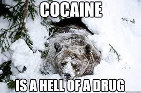Bear Cocaine Meme - cocaine is a hell of a drug coke head bear quickmeme