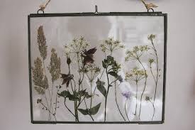 pressed flowers a handmade cottage pressed flowers in glass frames