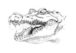 head of a crocodile the crocodile with open mouth sketch black