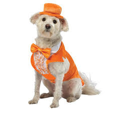 dog candy corn witch costume dog costumes baxterboo
