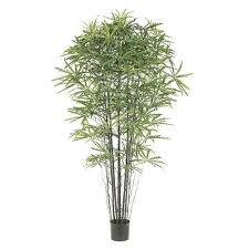cheap best trees for pots find best trees for pots deals on line at