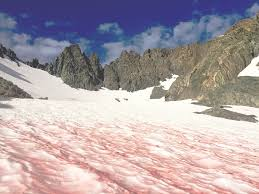 Alaska how fast does a bullet travel images Watermelon snow 39 is making glaciers in alaska melt faster jpg