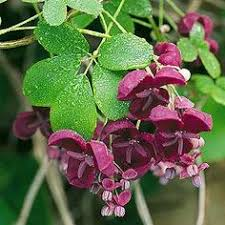 Climbing Plants That Flower All Year - top 10 climbing plants for a small trellis plants gardens and