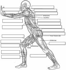 label the muscles of the body side view tissue u0026 muscles lets