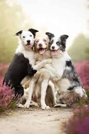 Group Hug Meme - tim cornwell on hug photos doggies and puppys