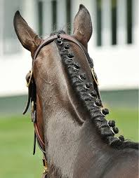 hairstyles for horses 74 best cute horse hairstyles images on pinterest horses