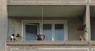 katzenschutz balkon alternative zum balkonnetz seite 3 katzen forum