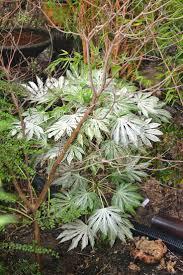 748 best winter garden scents u0026 colors images on pinterest