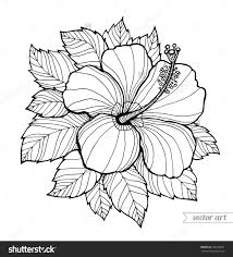 hibiscus flower h is fro hibiscus flower coloring page h is fro