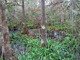 plant communities environmental nature center gardening south florida style fern forest nature center